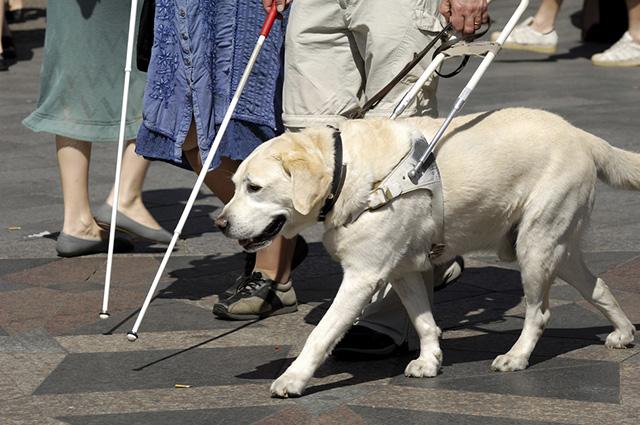 Os cães de assistência ajudam pessoas com alguma deficiência física