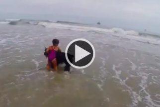 Cão coruja: schnauzer protege garotinha de ondas do mar