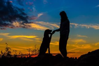 Cão se sacrifica para salvar pessoas de atentado terrorista em casamento