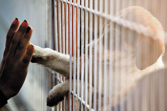 Cidade determina que pet shops só podem ter animais resgatados