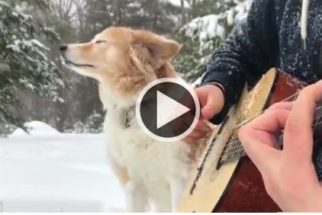 Conheçam Maple, uma cadelinha que faz dupla musical com tutor