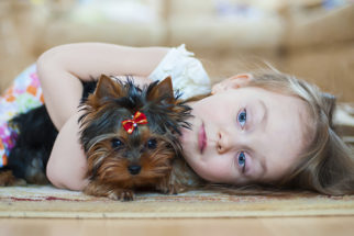 Como cachorros ajudam crianças autistas