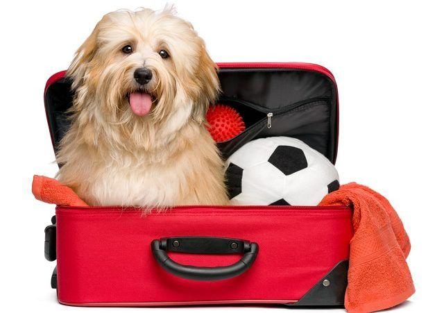 Cuidados na hora de viajar com seu cão