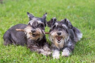 As raças de cães que são a melhor companhia para uma viagem