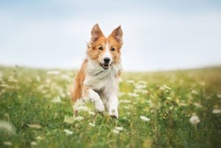 As principais dúvidas que as pessoas têm sobre cachorros