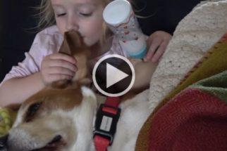 Fofura: beagle adora quando garotinha brinca com suas orelhas