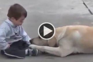 Fofura: cadelinha tenta se aproximar de garoto com síndrome de down