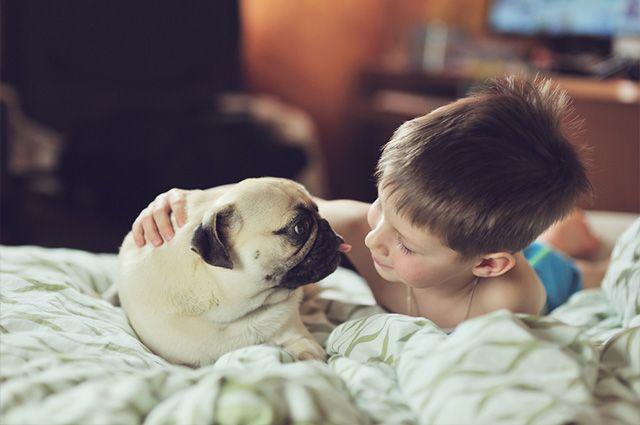 Garotinho deixa os pais em pânico ao desaparecer com seu cãozinho