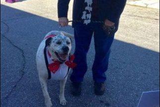 Grupos de resgate realizam 'baile de formatura' para cães idosos