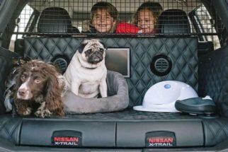 Montadora de automóveis lança carro adaptado para transportar cachorros
