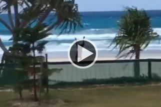 Para rir: cadelinha desastrada não esconde alegria ao chegar em praia