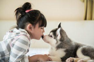 Taiwan é o primeiro país da Ásia a proibir o consumo e comércio de carne canina