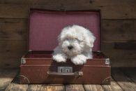 Vai viajar e quer levar o pet? Veja 5 hotéis bons para cachorros