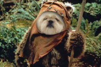 15 cães que comemoraram o Dia Internacional de Star Wars