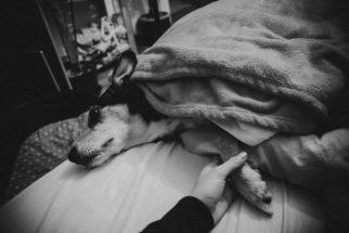 Tutora faz registro de recuperação, mas acaba fotografando últimos dias de pet