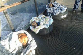 Cães de rua que vivem em terminal de ônibus ganham camas improvisadas