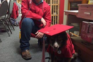 Estudante diabético participa de colação de grau ao lado de cão de assistência