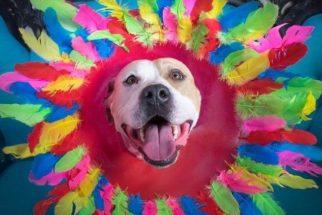 Fotógrafa usa colares elisabetanos para fazer ensaio com cães