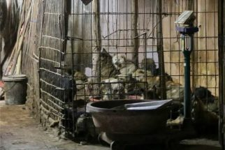 Governo chinês proíbe carne canina em festival de Yulin
