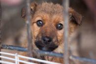 Ação faz cão 'adotar' humano para incentivar à adoção de animais