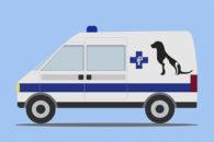 Conheça a região onde é possível acionar ambulância 24h para atender cães