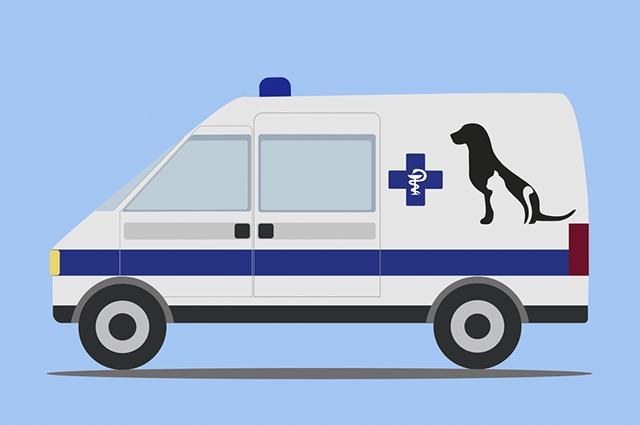 Os profissionais dos resgates e transportes dos animais passaram por uma especialização de primeiros socorros caninos
