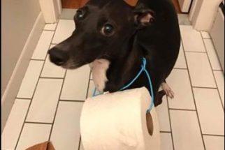 Ao perceber que o papel higiênico acabou, tutora é 'salva' por seu dog