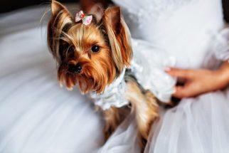 Aprenda dicas de como inserir o seu cão na cerimônia de casamento