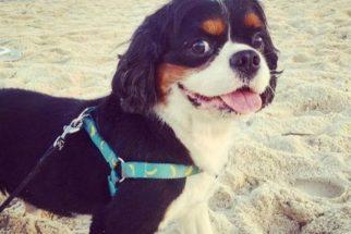 Ator 'global' usa seu Instagram para lamentar a morte de seu cãozinho