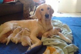 15 cadelinhas que vão passar o Dia das Mães muito bem acompanhadas