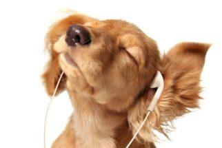 Música pra cachorro: Confira as músicas inspiradas no melhor amigo do homem