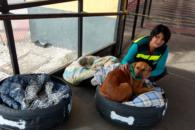 Camas especiais criadas para cães em situação de rua