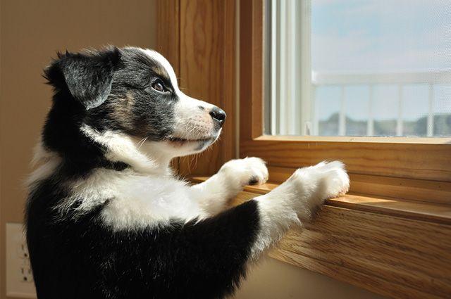 Estudo aponta que cachorros sofrem ao serem deixados em casa sozinhos