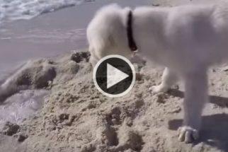 Filhote fica confuso após ondas do mar encherem de água buraco na praia