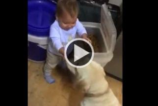 Fofura: bebê paciente ensina golden retriever a comer devagar
