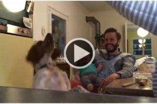 Fofura: cãozinho saltitante arranca gargalhadas de bebê