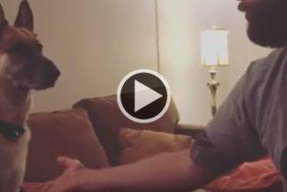 Hilário: cãozinho se faz de difícil na hora de dar a pata para tutor