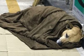 Cão funcionário de posto de combustível é ferido por morador de rua