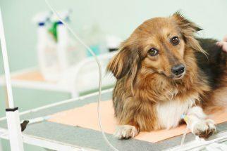 Vereador defende farmácia com remédios veterinários a preços populares