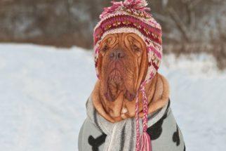 Veterinária orienta sobre os cuidados necessários com o cão durante o frio