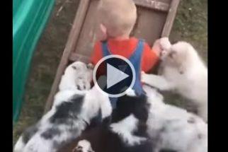 Vídeo: garotinho é 'atacado' por 'alcateia de filhotes ferozes'