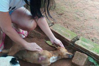 Homem corta patas de cachorro por estar incomodado com latidos