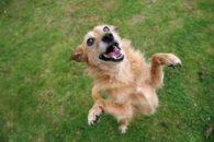 Batismo divertido: 20 nomes engraçados para cães