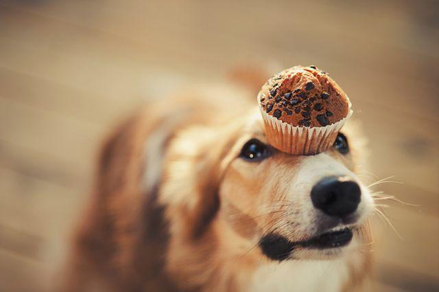 30 nomes de cães inspirados em comidas