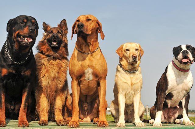 40 Nomes para cachorros de grande porte