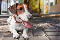 40 nomes para cachorros de pequeno porte