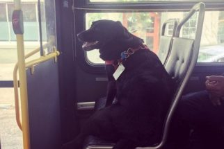 Cadelinha esperta pega ônibus sozinha todos os dias para ir à parque