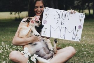 Cadelinha grávida ganha ensaio fotográfico para eternizar gestação