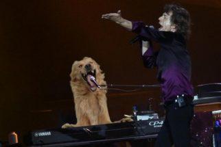 Hilário: foto de cãozinho gera batalha épica de montagens no Photoshop
