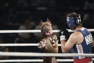 Foto de cachorro tentando pegar brinquedo gera memes hilários